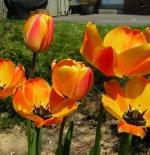 صورة ازهار الربيع