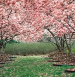 صورة لأشجار جذابة