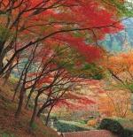 صورة لأشجار ملونة