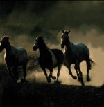 صورة خيول