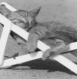صورة قطة مسترخية