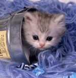 صورة القطة الشقية