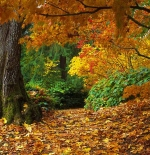 صورة لفصل الخريف