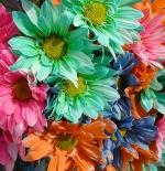 صورة ازهار ملونة