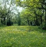 صورة جميلة لغابة