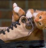 صورة القطة والحذاء