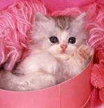 صورة قطة مدللة