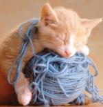 صورة قطة تلعب