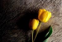 صورة ازهار صفراء