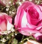 صورة أزهار وردية