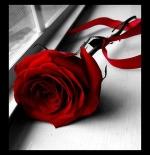 صورة وردة الحب