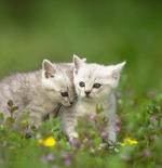 صورة قطط في أحضان الطبيعة
