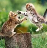 صورة قطان يتشاجران