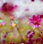 صورة قلوب متناثرة
