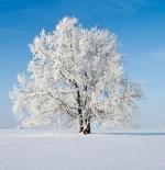 صورة شجرة وحيدة