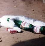 صورة قطة مدخنه