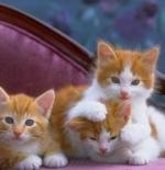 صورة لقطط المنزل