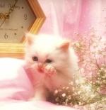 صورة قطة ناعمة