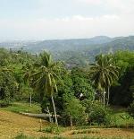 الطبيعة في سيبو