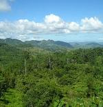 Central Cebu National Park