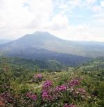 Mountain Batur, Bali