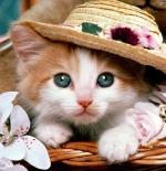 صورة قطة أنيقة