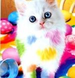 صورة القطة الملونه