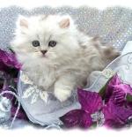 صورة قطة جميلة