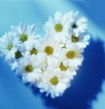 صورة ازهار رائعة