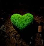 صورة قلب أخضر