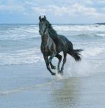 صورة حصان الشاطئ