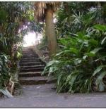 غابات برزبن