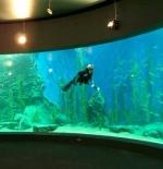حوض ملبورن لعرض الأسماك