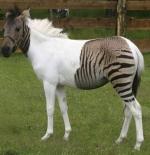 صورة حيوانات غريبة