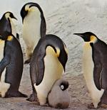صورة البطريق الإمبراطورى