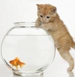 صورة القطة الجميلة