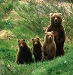 صورة عائلة الدببة