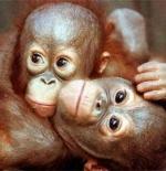 صورة القرود الصغار