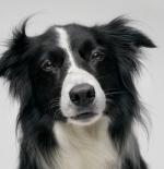 صورة الكلب الجميل