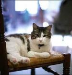 صورة القطة الرائعة