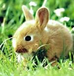 صورة ارنب جميل