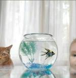 صورة طفل مع قط وسمكة