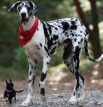 أطول كلب فى العالم