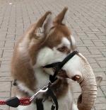 صورة الكلب والخرطوم