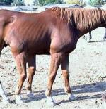 صورة الحصان الغريب