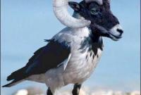 صورة الطائر الغريب