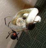 صورة العنكبوت والثعبان