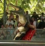 صورة مصارعة التمساح