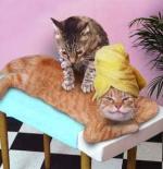 صورة مساج القطط