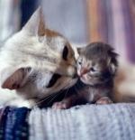 صورة القطط الجميلة